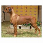 Caprivi Asgood As Itgets (Aust Grand Champion ET)