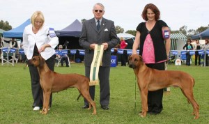 aust_bred_in_show