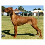 Caprivi Witching Hour (Aust Grand Champion)
