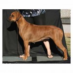Inzara Miss Money Penny (Aust Champion)