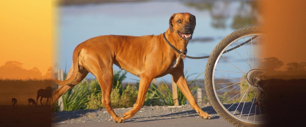 Dog Breeders Adelaide South Australia - Best Dogs 2018
