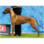 Almazart Bright Shadow (Aust Champion)